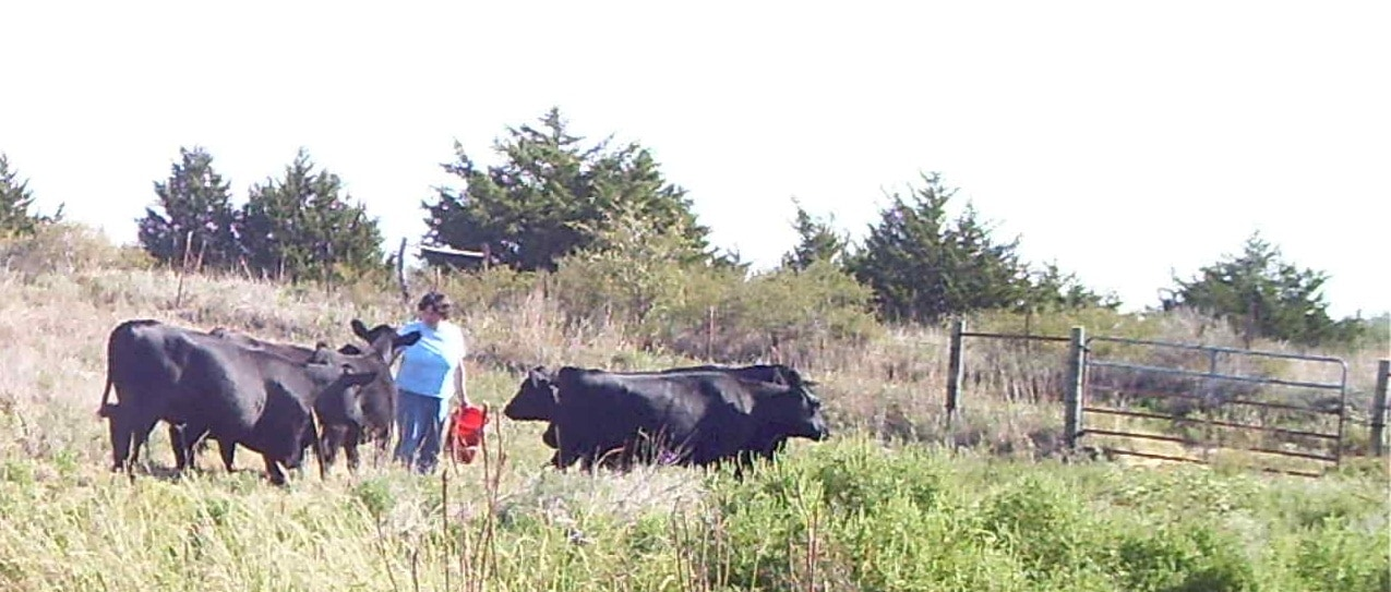Becky McCray feeding cattle.